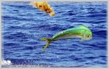 Florida Keys Offshore Fishing