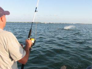 tarpon fishing 017