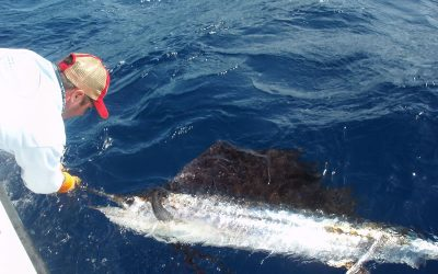 Sailfish- Key West Sailfishing