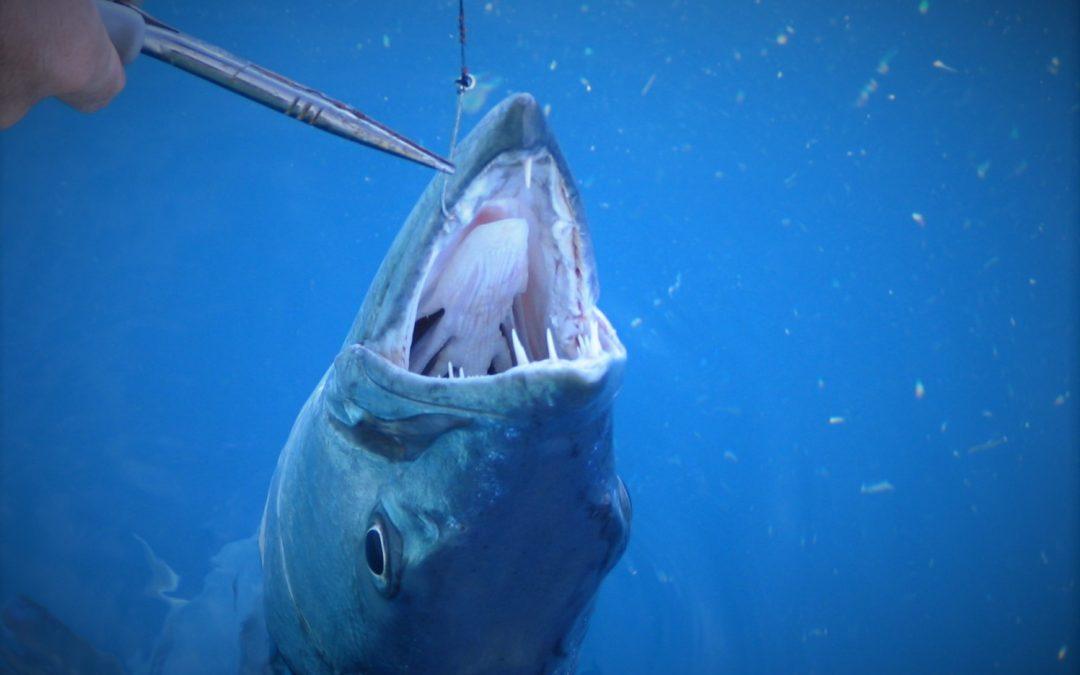 Barracuda Fishing