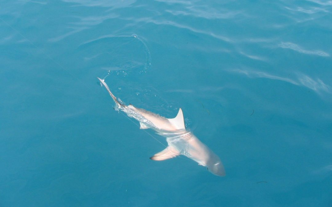 Florida Keys Shark Fishing